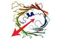 Protein-Export aus den Zellkraftwerken