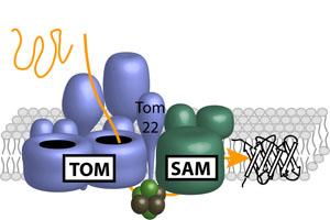 molekulare Fässer